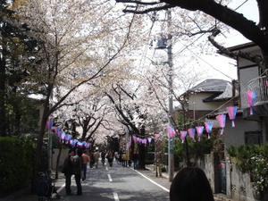Sakuramaturi_2